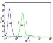 CD117 antibody flow cytometric analysis of 293 cells (green) compared to a negative control cell (blue). FITC-conjugated goat-anti-rabbit secondary Ab was used for the analysis.