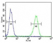 AMACR antibody flow cytometric analysis of MDA-MB231 cells (green) compared to a <a href=../search_result.php?search_txt=n1001>negative control</a> (blue). FITC-conjugated goat-anti-rabbit secondary Ab was used for the analysis.