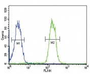 ABCC3 antibody flow cytometric analysis of MDA-MB435 cells (right histogram) compared to a <a href=../search_result.php?search_txt=n1001>negative control</a> (left histogram). FITC-conjugated goat-anti-rabbit secondary Ab was used for the analysis.