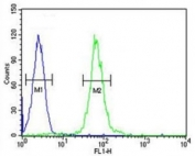 ABCD1 antibody flow cytometric analysis of HL-60 cells (right histogram) compared to a <a href=../search_result.php?search_txt=n1001>negative control</a> (left histogram). FITC-conjugated goat-anti-rabbit secondary Ab was used for the analysis.
