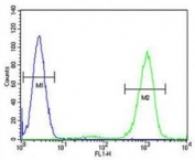 ADA antibody flow cytometric analysis of HL-60 cells (right histogram) compared to a negative control (left histogram). FITC-conjugated goat-anti-rabbit secondary Ab was used for the analysis.