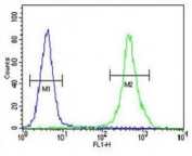 ZEB2 antibody flow cytometric analysis of MDA-MB435 cells (right histogram) compared to a negative control (left histogram). FITC-conjugated goat-anti-rabbit secondary Ab was used for the analysis.