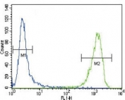 Alpha Actin antibody flow cytometric analysis of CEM cells (green) compared to a negative control (blue).