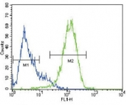 ABCG2 antibody flow cytometric analysis of HepG2 cells (right histogram) compared to a negative control (left histogram)