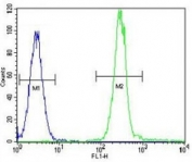 Anti-Vimentin antibody flow cytometric analysis of HeLa cells (right histogram) compared to a negative control cell (left histogram). FITC-conjugated goat-anti-rabbit secondary Ab was used for the analysis.