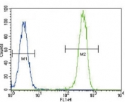 Anti-PCNA antibody flow cytometric analysis of HeLa cells (right histogram) compared to a negative control cell (left histogram). FITC-conjugated goat-anti-rabbit secondary Ab was used for the analysis.