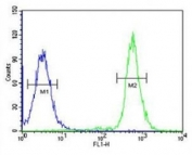 A2ML1 antibody flow cytometric analysis of 293 cells (right histogram) compared to a <a href=../search_result.php?search_txt=n1001>negative control</a> (left histogram). FITC-conjugated goat-anti-rabbit secondary Ab was used for the analysis.