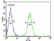 AXIN2 antibody flow cytometric analysis of Jurkat cells (right histogram) compared to a negative control (left histogram). FITC-conjugated goat-anti-rabbit secondary Ab was used for the analysis.