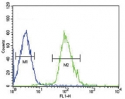 Beta III Tubulin antibody flow cytometric analysis of HepG2 cells (right histogram) compared to a negative control cell (left histogram). FITC-conjugated goat-anti-rabbit secondary Ab was used for the analysis.