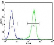 AQP11 antibody flow cytometric analysis of 293 cells (green) compared to a <a href=../search_result.php?search_txt=n1001>negative control</a> (blue). FITC-conjugated goat-anti-rabbit secondary Ab was used for the analysis.