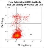 Flow cytometry using ABCB5 antibody on fresh WM852 cells. Data courtesy of Dr. Steve Reuland, University of Colorado, Denver