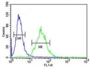CEBPB antibody flow cytometric analysis of 293 cells (green) compared to a negative control (blue). FITC-conjugated goat-anti-rabbit secondary Ab was used for the analysis.