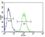 Aurora-A antibody flow cytometric analysis of HeLa cells (green) compared to a <a href=../search_result.php?search_txt=n1001>negative control</a> (blue). FITC-conjugated goat-anti-rabbit secondary Ab was used for the analysis.