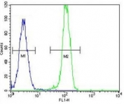 AKT2 antibody flow cytometric analysis of HeLa cells (right histogram) compared to a negative control (left histogram). FITC-conjugated goat-anti-rabbit secondary Ab was used for the analysis.