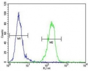 AKT1 antibody flow cytometric analysis of MDA-MB435 cells (green) compared to a negative control (blue).