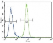 Anti-AKT antibody flow cytometric analysis of MDA-MB435 cells (right histogram) compared to a negative control (left histogram). FITC-conjugated goat-anti-rabbit secondary Ab was used for the analysis.
