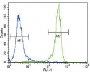 FGFR2 antibody flow cytometric analysis of NCI-H460 cells (right histogram) compared to a negative control (left histogram). FITC-conjugated goat-anti-rabbit secondary Ab was used for the analysis.