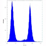 BRAF antibody flow cytometric analysis of HeLa cells (right histogram) compared to a negative control (left histogram).
