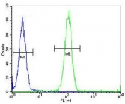 ACCN1 antibody flow cytometric analysis (intracellular) of human WiDr cells (right histogram) compared to a negative control (left histogram). FITC-conjugated goat-anti-rabbit secondary Ab was used for the analysis.