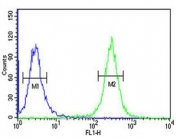 ACSM1 antibody intracellular flow cytometric analysis of human K562 cells (right histogram) compared to a <a href=../search_result.php?search_txt=n1001>negative control</a> (left histogram). FITC-conjugated goat-anti-rabbit secondary Ab was used for the analysis.