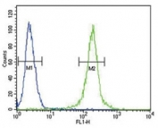 AMH antibody flow cytometric analysis of 293 cells (green) compared to a <a href=