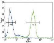 Flow cytometry testing of fixed and permeabilized human HepG2 cells with ATP7B antibody; Blue=isotype control, Green= ATP7B antibody.