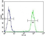Flow cytometry testing of fixed and permeabilized human K562 cells with ELAVL2 antibody; Blue=isotype control, Green= ELAVL2 antibody.
