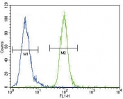 Flow cytometry testing of human MDA-MB-435 cells with Autotaxin antibody; Blue=isotype control, Green= Autotaxin antibody.