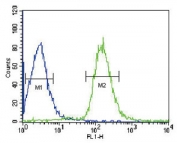 Flow cytometry testing of human HepG2 cells with Albumin antibody; Blue=isotype control, Green= Albumin antibody.