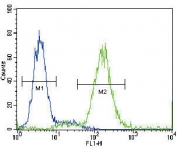 Flow cytometry testing of fixed and permeabilized human HepG2 cells with Angiotensin II Type 1 Receptor antibody; Blue=isotype control, Green= Angiotensin II Type 1 Receptor antibody.