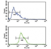 Flow cytometry testing of human CCRF-CEM cells with ADH1C antibody; Blue=isotype control, Green= ADH1C antibody.