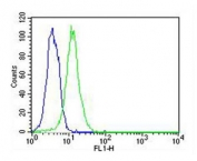 Flow cytometry testing of fixed and permeabilized human HeLa cells with ATG4A antibody; Blue=isotype control, Green= ATG4A antibody.