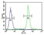 Flow cytometry testing of human A375 cells with ARL8A antibody; Blue=isotype control, Green= ARL8A antibody.