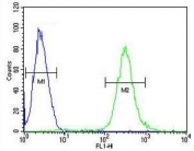 Flow cytometry testing of human CEM cells with ATF7IP2 antibody; Blue=isotype control, Green= ATF7IP2 antibody.