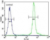 Flow cytometry testing of human HeLa cells with Additional sex combs-like protein 1 antibody; Blue=isotype control, Green= Additional sex combs-like protein 1 antibody.