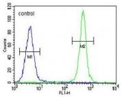 Flow cytometry testing of human MDA-MB-435 cells with ALKBH6 antibody; Blue=isotype control, Green= ALKBH6 antibody.