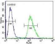 Flow cytometry testing of human A549 cells with ARRB1 antibody; Blue=isotype control, Green= ARRB1 antibody.