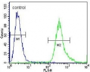Flow cytometry testing of human A549 cells with ADP,ATP carrier protein 3 antibody; Blue=isotype control, Green= ADP,ATP carrier protein 3 antibody.