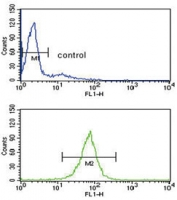 Flow cytometry testing of human HL60 cells with ARHGDIA antibody; Blue=isotype control, Green= ARHGDIA antibody.