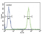 Flow cytometry testing of human HEK293 cells with ASMT antibody; Blue=isotype control, Green= ASMT antibody.