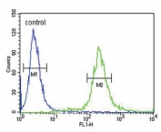 Flow cytometry testing of human HEK293 cells with ADCYAP1 antibody; Blue=isotype control, Green= ADCYAP1 antibody.