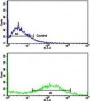 Flow cytometry testing of human NCI-H292 cells with Calponin 1 antibody; Blue=isotype control, Green= Calponin 1 antibody.