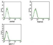 Rabbit IgG isotype control antibody FITC conjugate FACS human samples