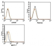 Rabbit IgG isotype control antibody PE conjugate FACS human samples