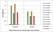 ELISA of human immunoglobulins shows the recombinant Human Lambda Light Chain antibody reacts to the lambda light chain of human immunoglobulins. No cross reactivity with the kappa light chain, mouse IgG, rat IgG, or goat IgG. The plate was coated with 50 ng/well of different immunoglobulins. 200 ng/mL or 50 ng/mL of RM127 was used as the primary and an alkaline phosphatase conjugated anti-rabbit IgG as the secondary.