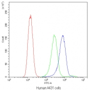 Flow cytometry testing of human A431 cells with Bax antibody at 1ug/10^6 cells (blocked with goat sera); Red=cells alone, Green=isotype control, Blue=Bax antibody.