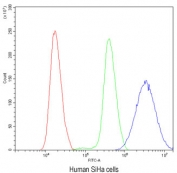 Flow cytometry testing of human SiHa cells with Ataxin 3 antibody at 1ug/10^6 cells (blocked with goat sera); Red=cells alone, Green=isotype control, Blue=Ataxin 3 antibody.