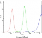 Flow cytometry testing of human A549 cells with Ataxin 3 antibody at 1ug/10^6 cells (blocked with goat sera); Red=cells alone, Green=isotype control, Blue=Ataxin 3 antibody.