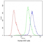 Flow cytometry testing of human A431 cells with ABCG5 antibody at 1ug/10^6 cells (blocked with goat sera); Red=cells alone, Green=isotype control, Blue=ABCG5 antibody.