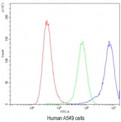 Flow cytometry testing of human A549 cells with Ataxin-2 antibody at 1ug/10^6 cells (blocked with goat sera); Red=cells alone, Green=isotype control, Blue=Ataxin-2 antibody.